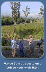 Free Tour of Lyman Kona Coffee Farms Offered Daily at Mango Sunset Bed & Breakfast